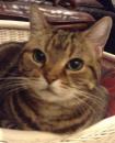 関川 由美子 (写真は茜屋さんの看板猫です)